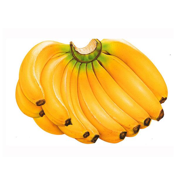 موز میوه فصل ( 1 )