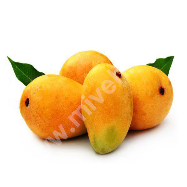 انبه – میوه فصل