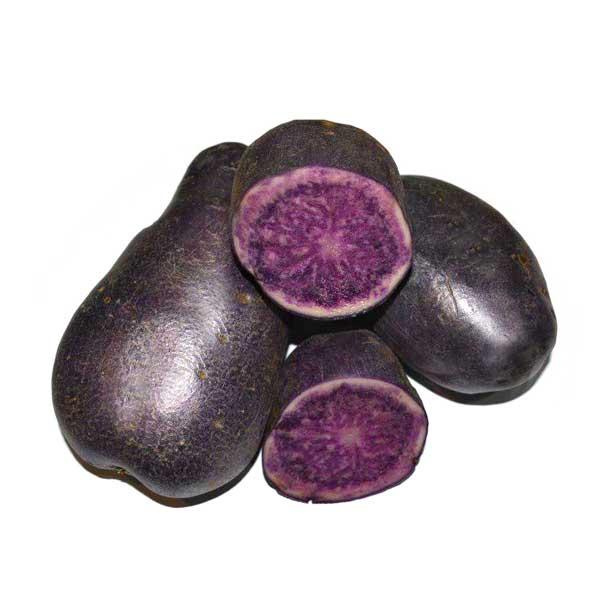 potato-india